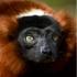 Madagassisch online lernen